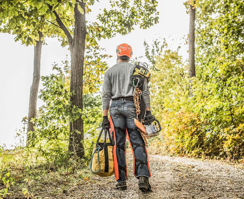 What is an Arborist and why hire one?