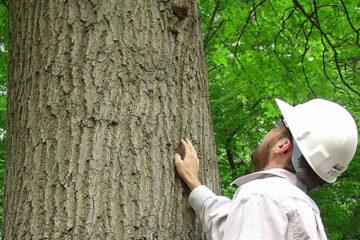 Tree Surveys & Reports