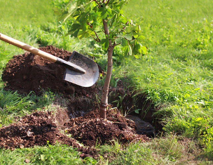 Tree planting expertise in West Cork and Kerry